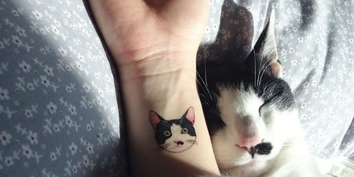 Tatuaje mascota gato gracioso